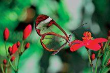 Butterfly Park of Benalmadena, Benalmadena, Spain