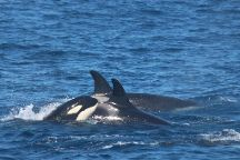 FIRMM Whale Watching, Tarifa, Spain