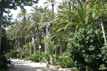 Palmeral of Elche, Elche, Spain