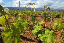 Wine Routes Mallorca, Palma de Mallorca, Spain