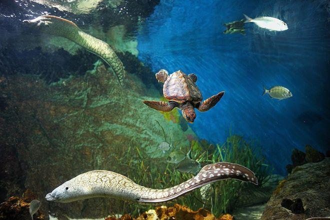 Aquarium Almunecar, Almunecar, Spain