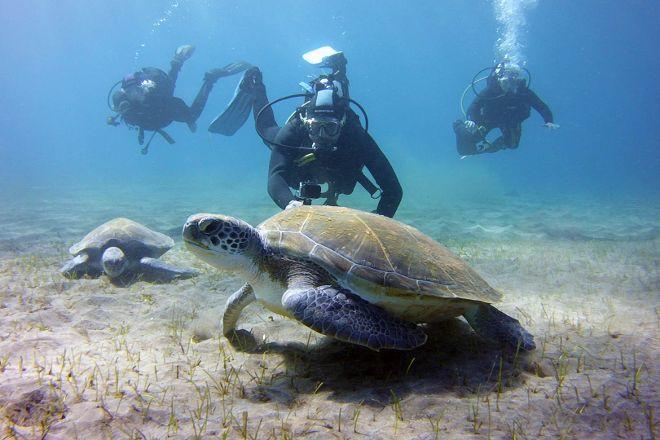 Dive Club Ocean Trek, Costa Adeje, Spain