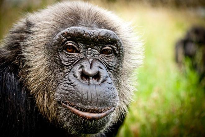 Fundacio Mona, Centre de Recuperacio de Primats, Riudellots de la Selva, Spain