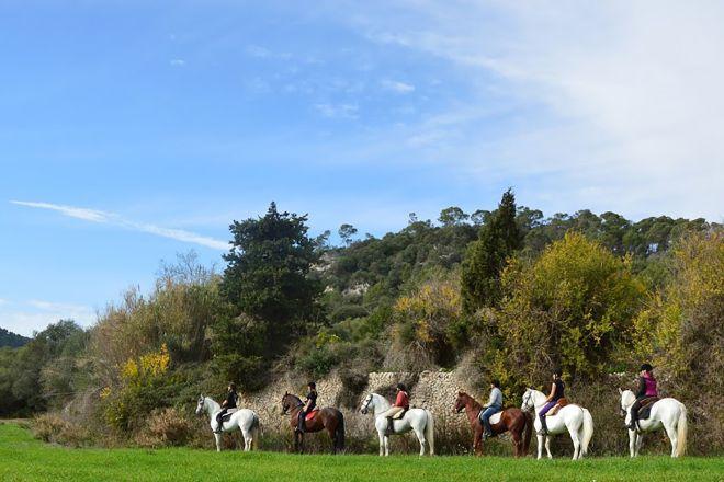 Mallorca Horses, Palma de Mallorca, Spain