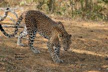 Ceylon Safari Tours