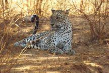 Go Yala Safari Tours