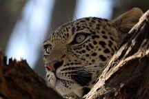 Manu Yala Safari Tours