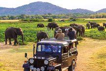 Nice To Meet Safari