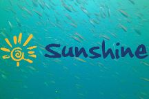 Sunshine Diving