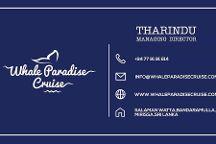 Whale Paradise Cruise