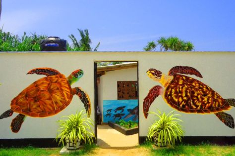 Koggala Sea Turtle Farm & Hatchery, Koggala, Sri Lanka
