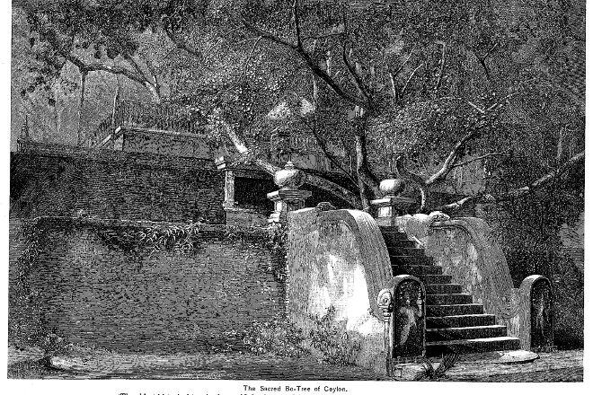 Jaya Sri Maha Bodhi, Anuradhapura, Sri Lanka