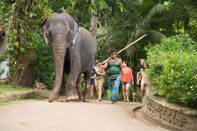 Millennium Elephant Foundation, Kegalle, Sri Lanka