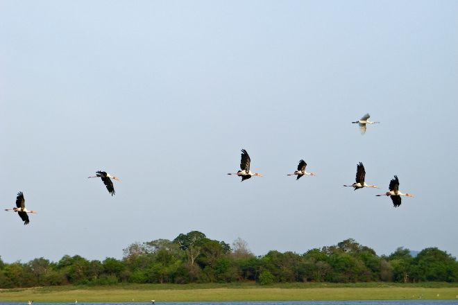 Minneriya National Park, North Central Province, Sri Lanka