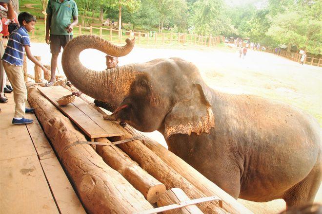 Pinnawala Elephant Orphanage, Pinnawala, Sri Lanka