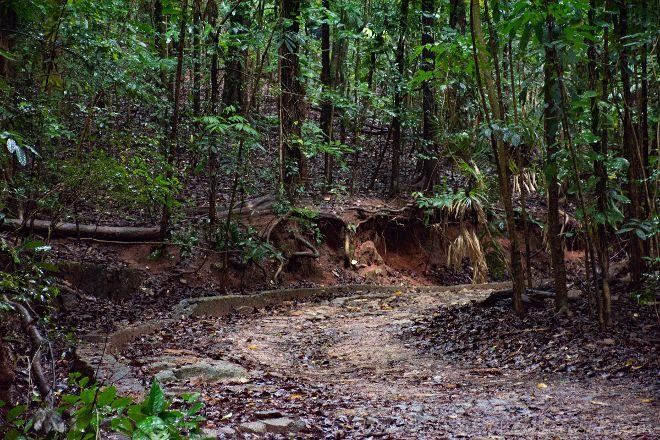 Udawattekele Sanctuary, Kandy, Sri Lanka