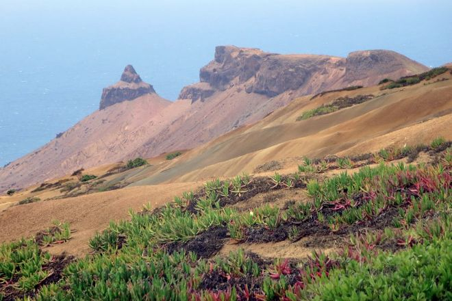Turks Cap, St Helena Island, St Helena, Ascension and Tristan da Cunha