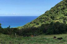 St. Kitts Captain Sunshine Tours, Basseterre, St. Kitts and Nevis
