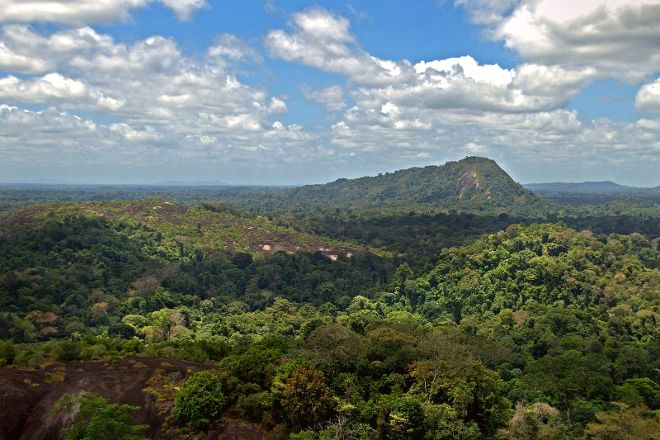 Tafelberg Nature Preserve, Saramacca District, Suriname