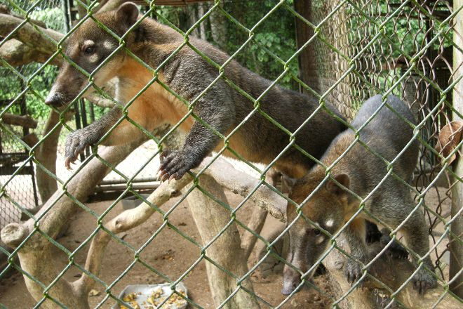 Paramaribo Zoo, Paramaribo, Suriname