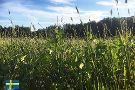 Drefseryd Gard