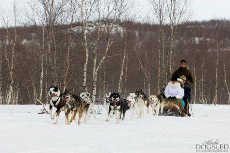 Wild Lapland, Rusktrask, Sweden
