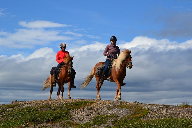 Ofelas Icelandic horses & Guide Service, Kiruna, Sweden