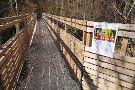 Holzweg Thal