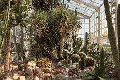 Zurich Succulent Plant Collection