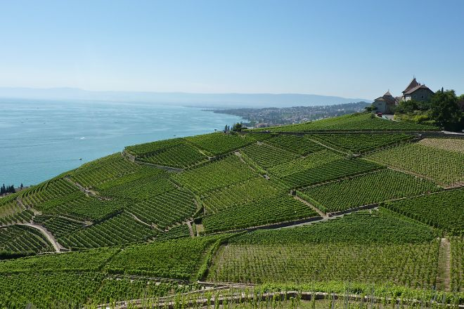 Corniche Lavaux Vineyards, Montreux, Switzerland