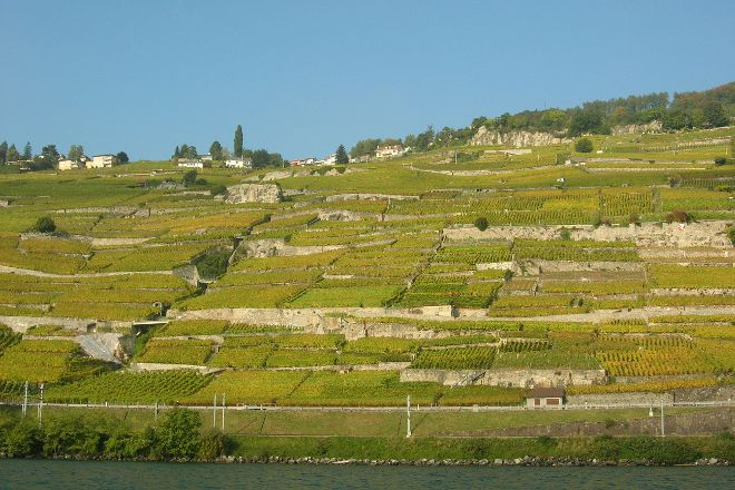 Lavaux Vineyard Terraces, Lutry, Switzerland