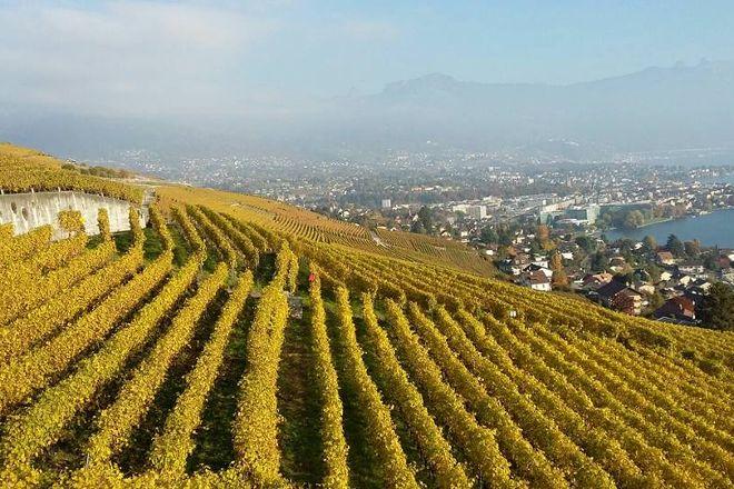 Maurice Neyroud, Chardonne, Switzerland