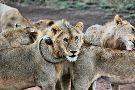 Tanzania Horizon Safaris