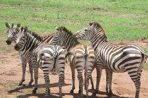 Bright African Safaris, Arusha, Tanzania
