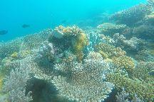Dreams Diving Center, Nungwi, Tanzania