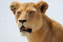 Emelika Safaris, Arusha, Tanzania