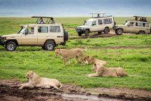 Euphoria Safaris, Arusha, Tanzania