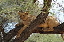 Joining Safaris