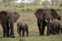 Jumbo Tours and Safaris