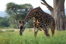 Lappet Faced Safaris, Arusha, Tanzania