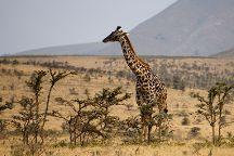 Local Moshi Adventures, Moshi, Tanzania