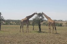 Materuni Tours, Moshi, Tanzania