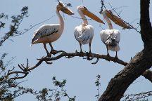 Napanda Tours and Safaris