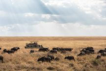 Pat Trekking and Safaris