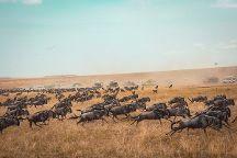 Pat Trekking and Safaris, Moshi, Tanzania