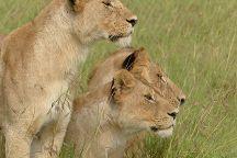Professional Safari Africa, Arusha, Tanzania