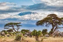 Safari Soles Tours