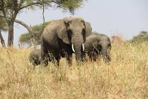 Shemeji Safari Tanzania, Arusha, Tanzania