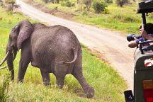 Unique Jungle Tours - Day Tours, Arusha, Tanzania