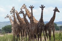 Watu Safaris, Morogoro, Tanzania